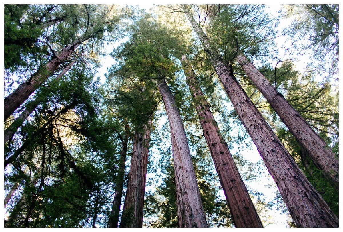 christinakarstphotography_redwoodswedding_houston-155.jpg