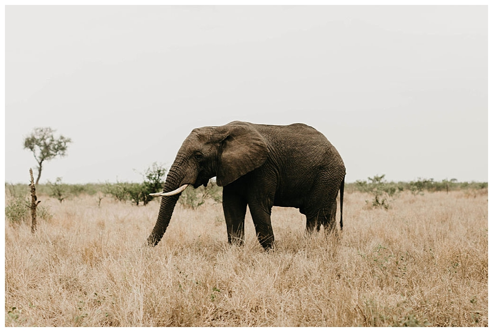 christinakarstphotography_southafricaelopement-100.jpg