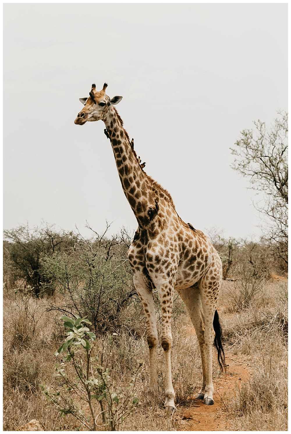 christinakarstphotography_southafricaelopement-111.jpg