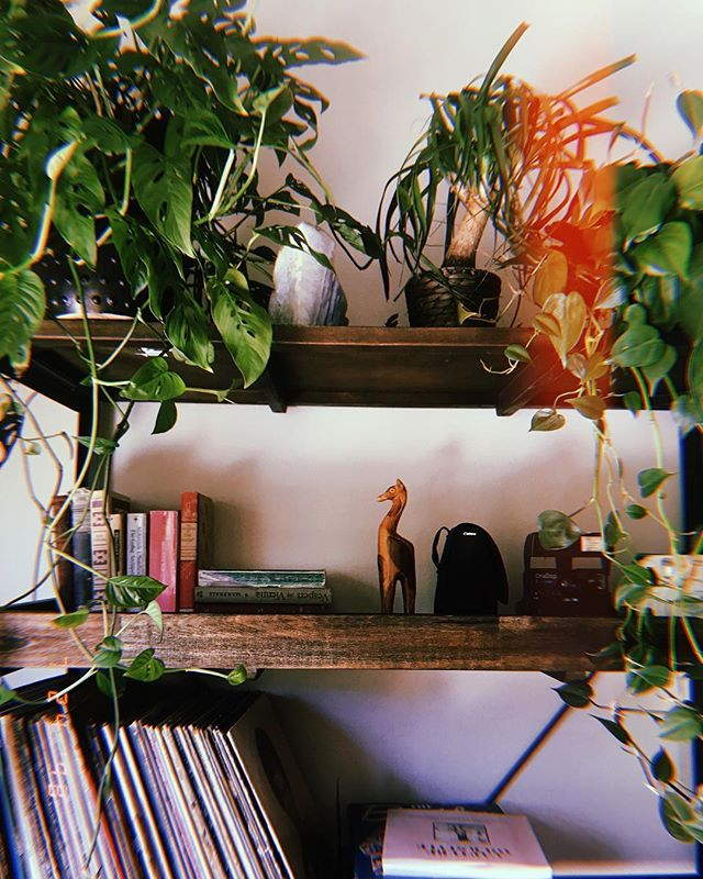 My little oasis 🌿🌾🌱 can you name the plants in the photo?! Brownie points for the botanical names! 🌵 - - - - #thehappynow #petitejoys #flashesofdelight #thatsdarling #mysf #interiordesign #seekthesimplicity #livethelittlethings #thatsdarling #morningslikethese #interiorinspo #uoonyou