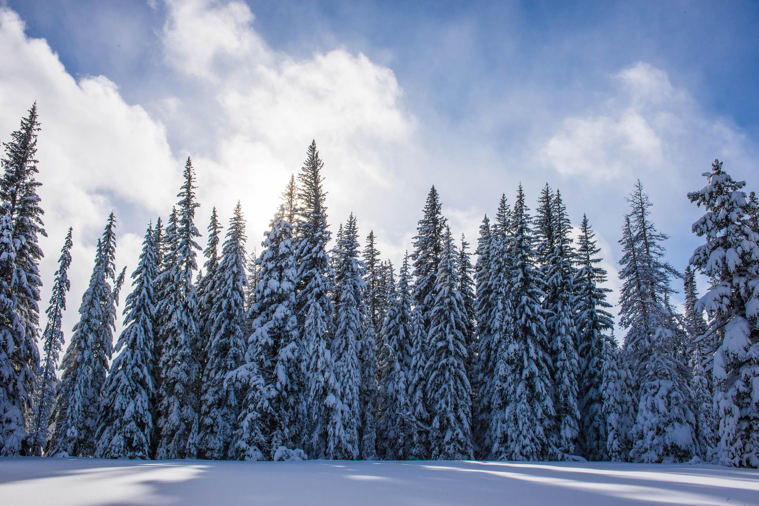 201512_0019_porcupine_trail_snowshoe.jpg