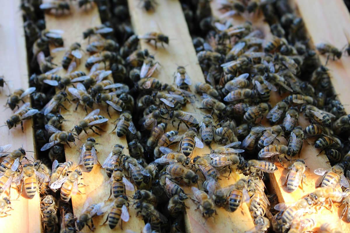 bees-02.jpg
