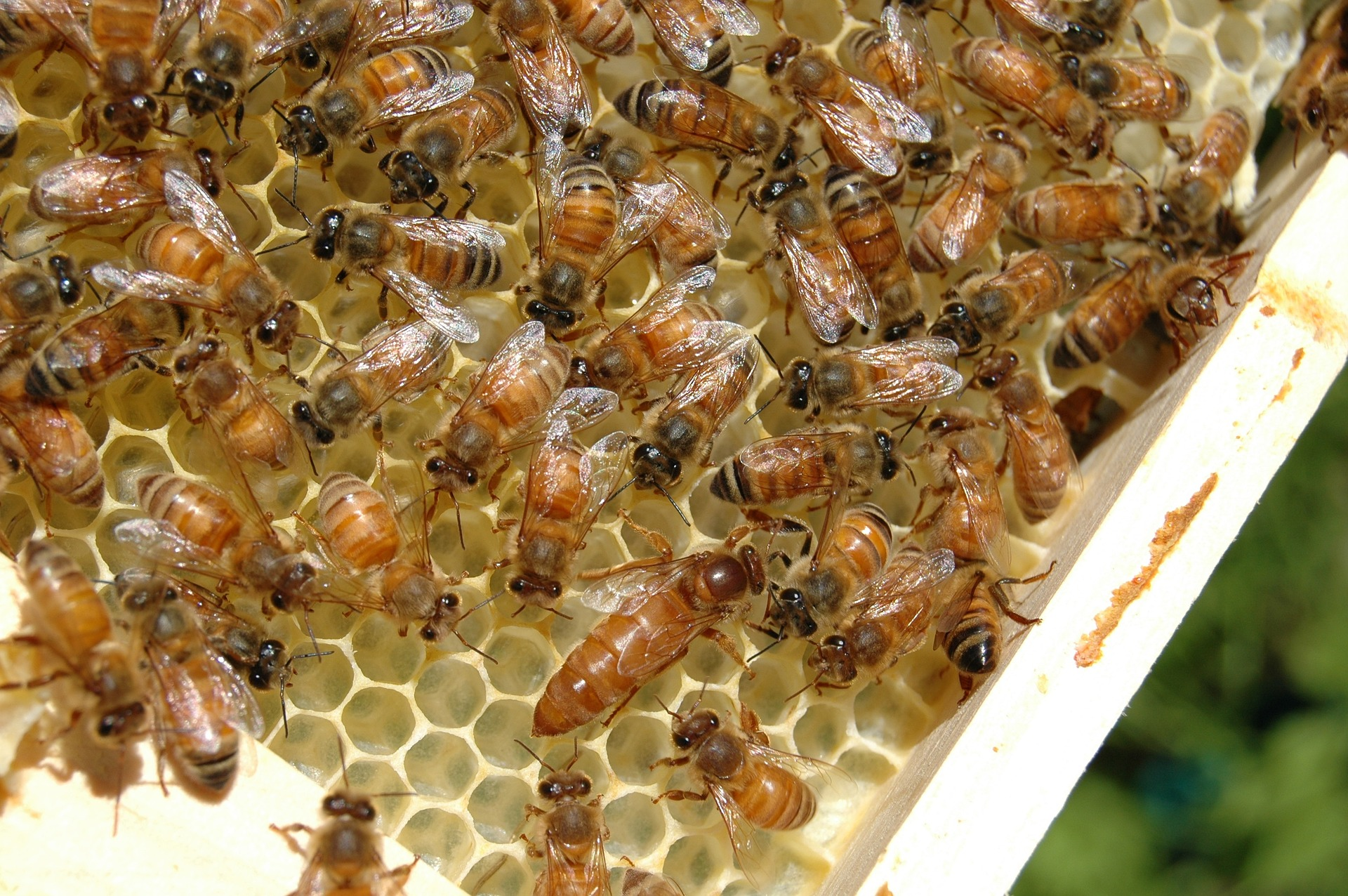 bees-676012_1920.jpg