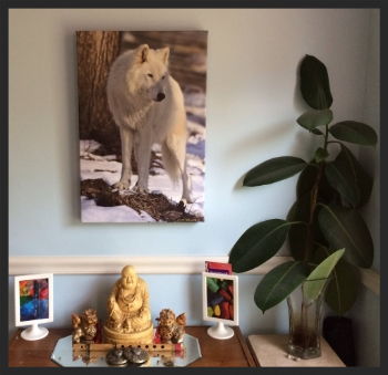 Image of Wolf Photograph Gifted To Me By David...Thank you!