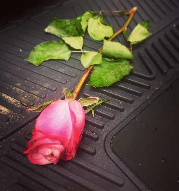 rose sent from loved ones photo by new york feng shui consultant laura cerrano .jpg