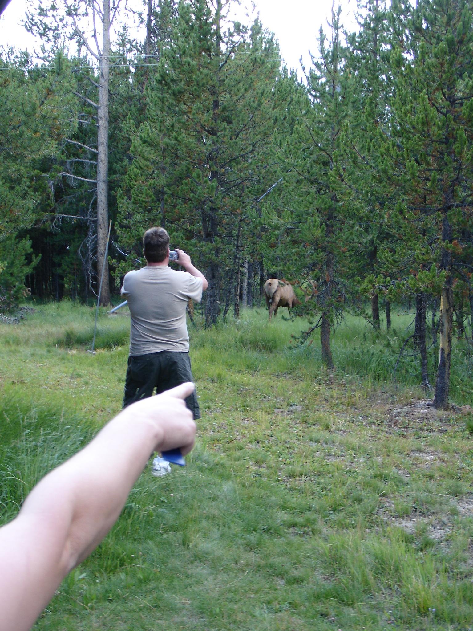 Tourist Scenes Series: Yellowstone ,  Wapiti! (Elk) ,  postcard set , 2015, 4 x 6 inches