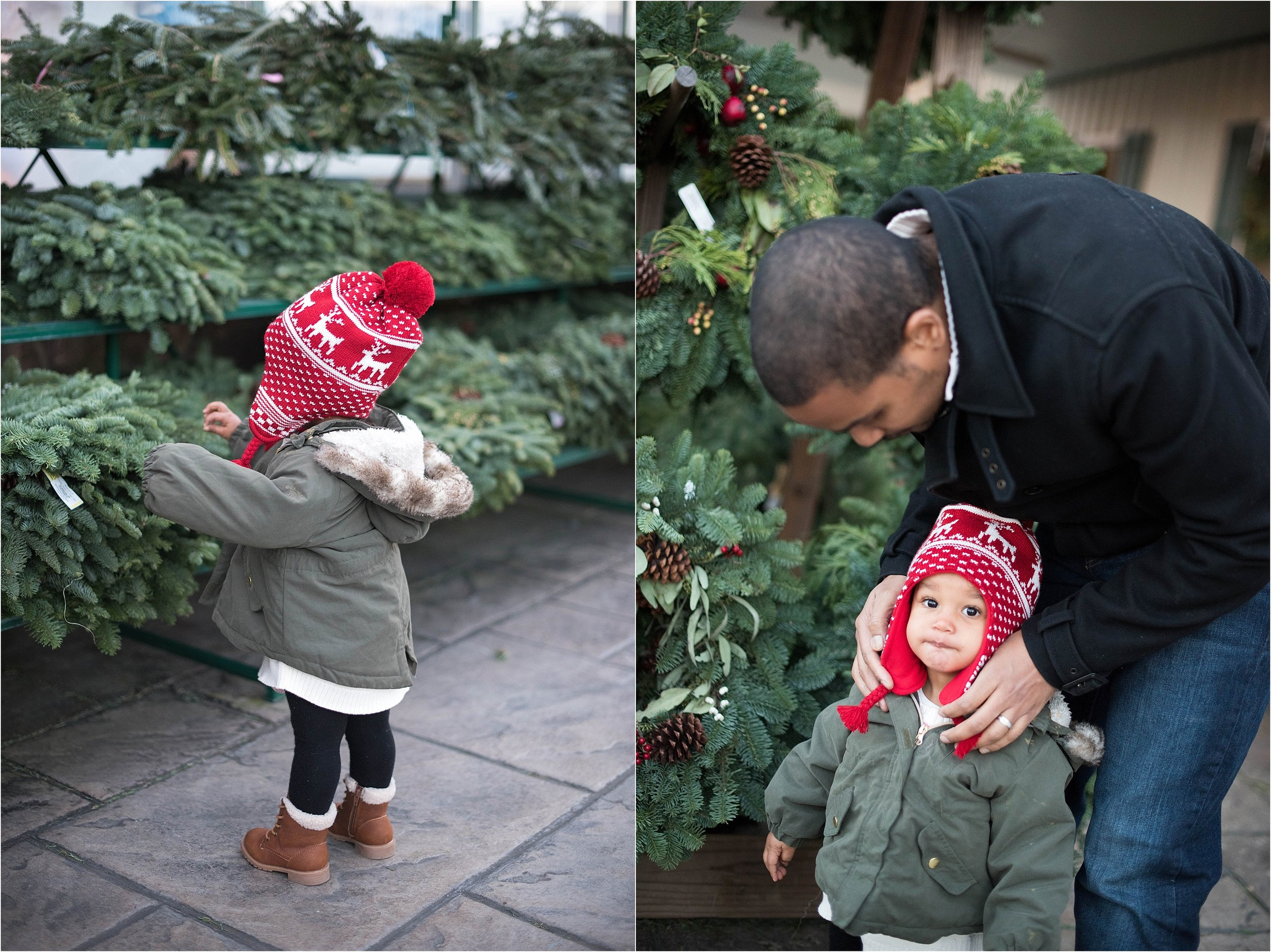 christmas_tradition_greenstreet_gardens_001.jpg