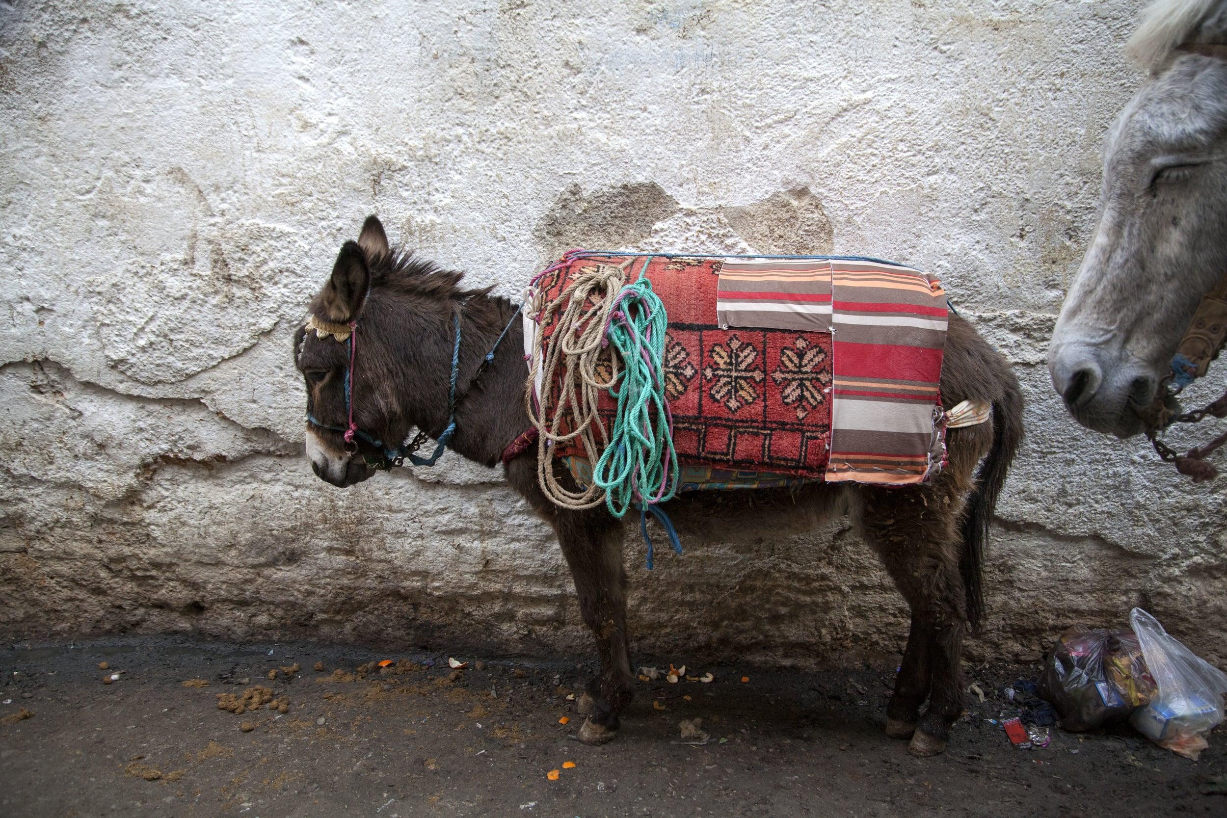 baby_donkey.jpg