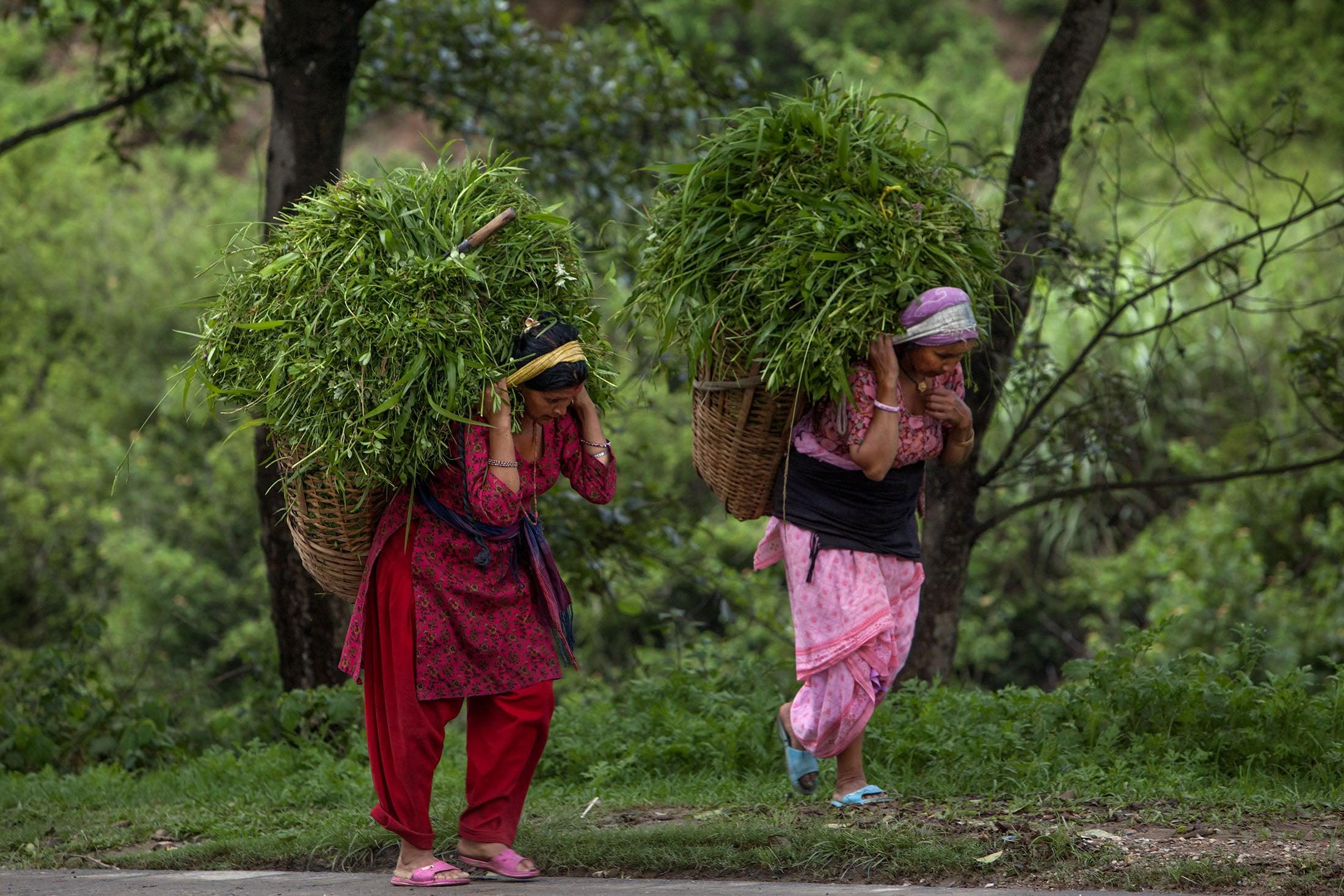 grasswomen.jpg