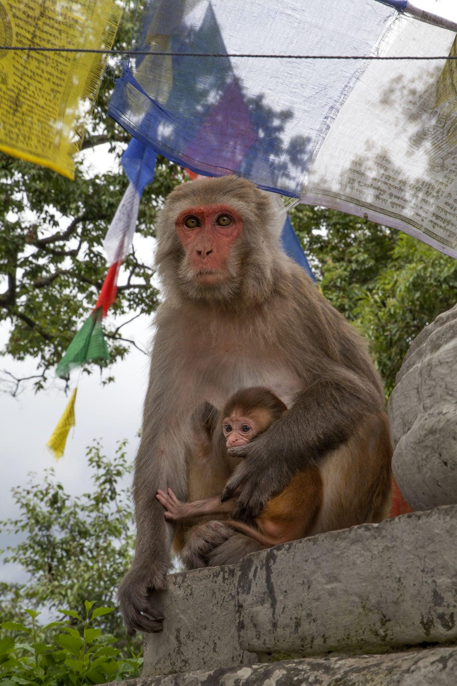 mom&babymonkey.jpg