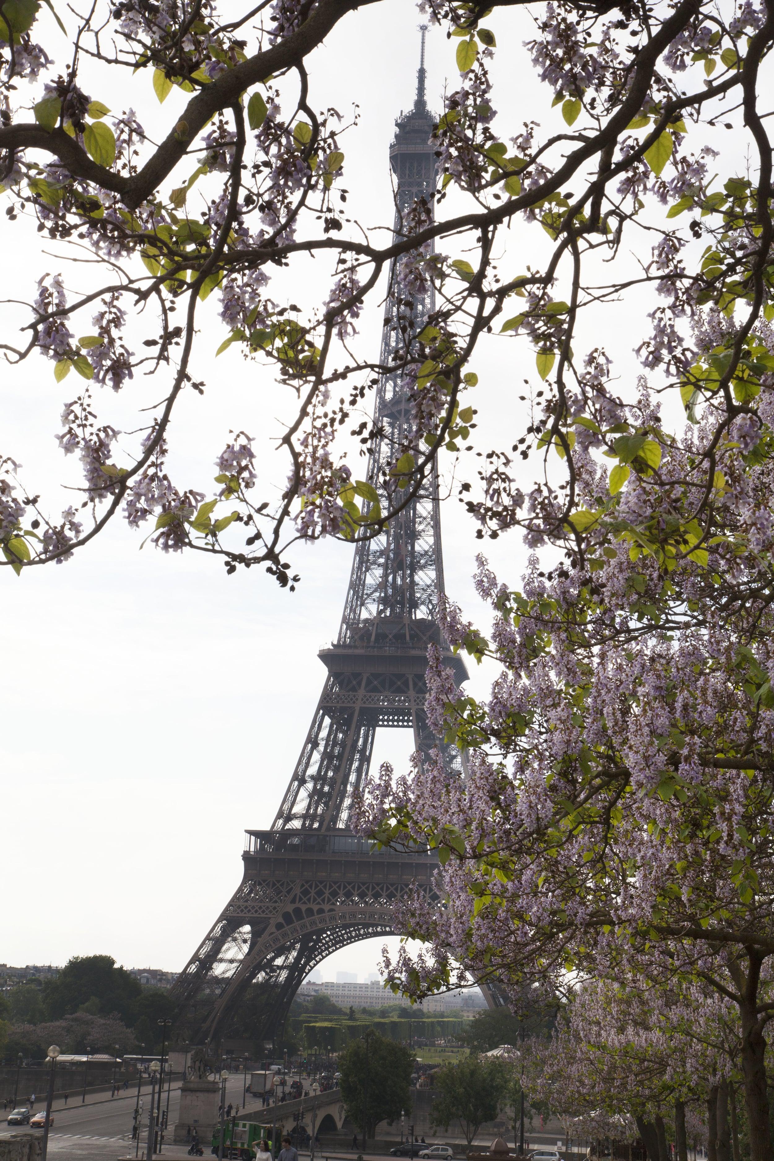 EiffelWithFlowers.jpg
