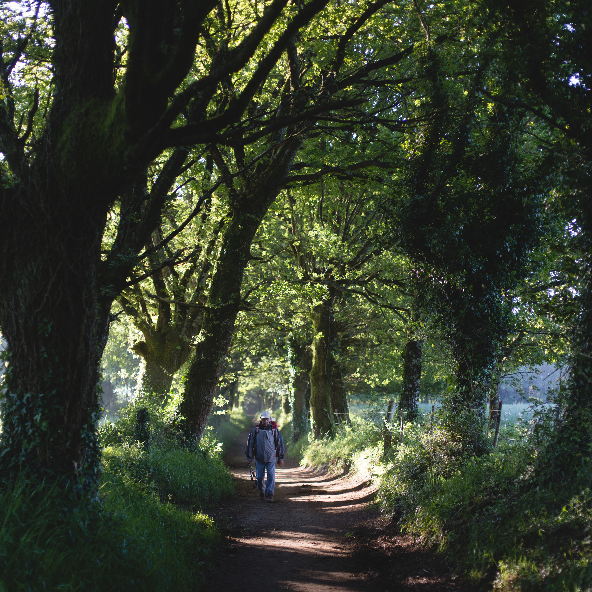 A pilgrim walking through the woods along the Camino.