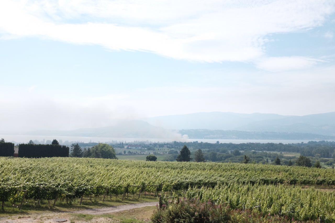 Tantalus Vineyards, July 2017.
