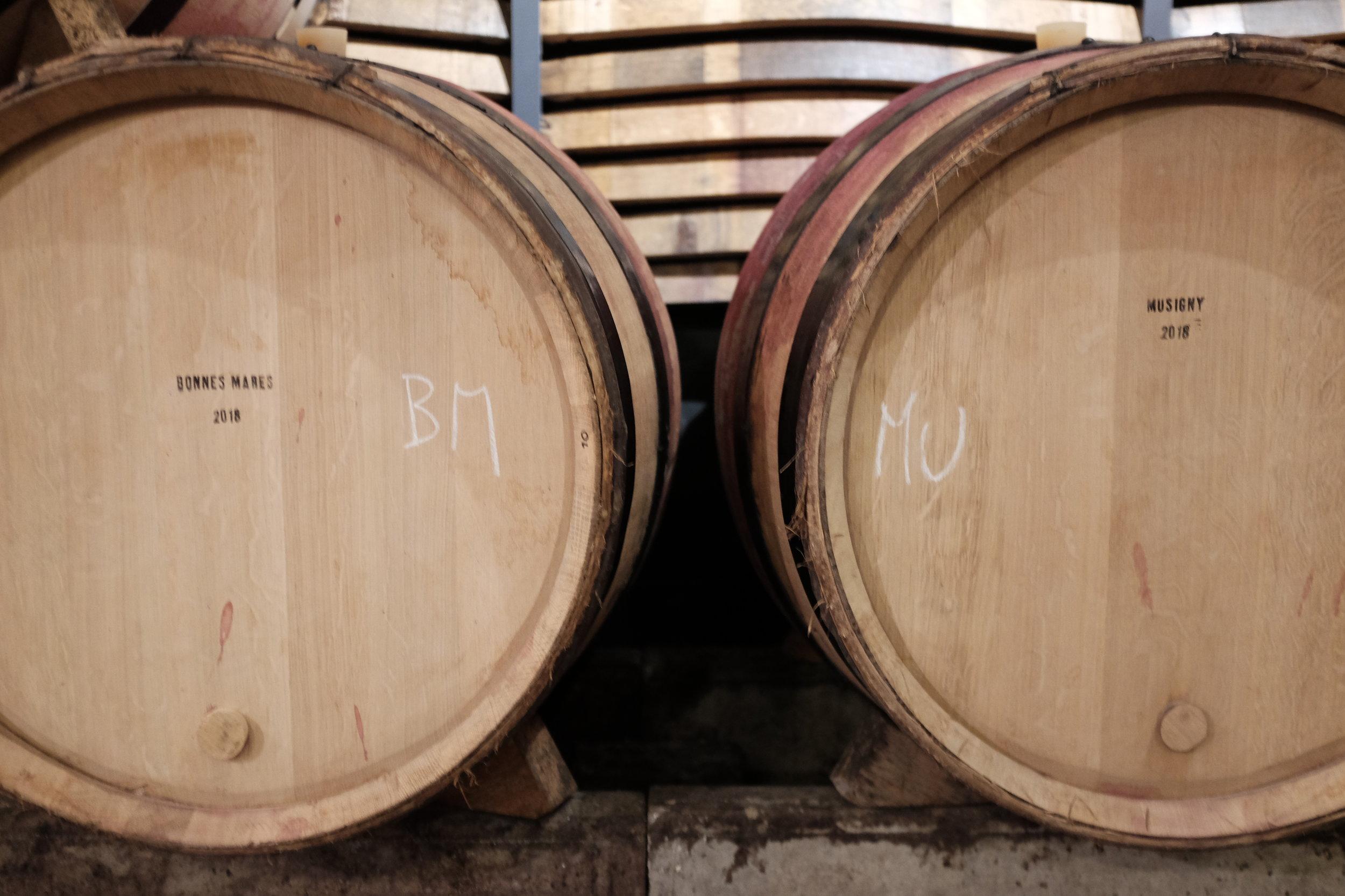 domaine-j-f-mugnier-barrels.jpg