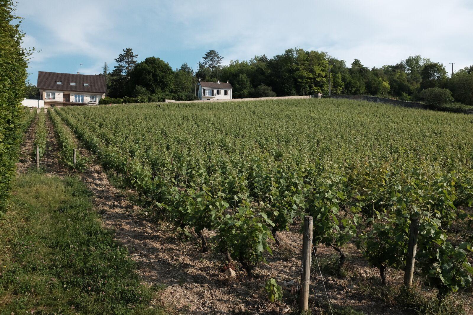 Clos des Ducs behind D'Angerville Estate.