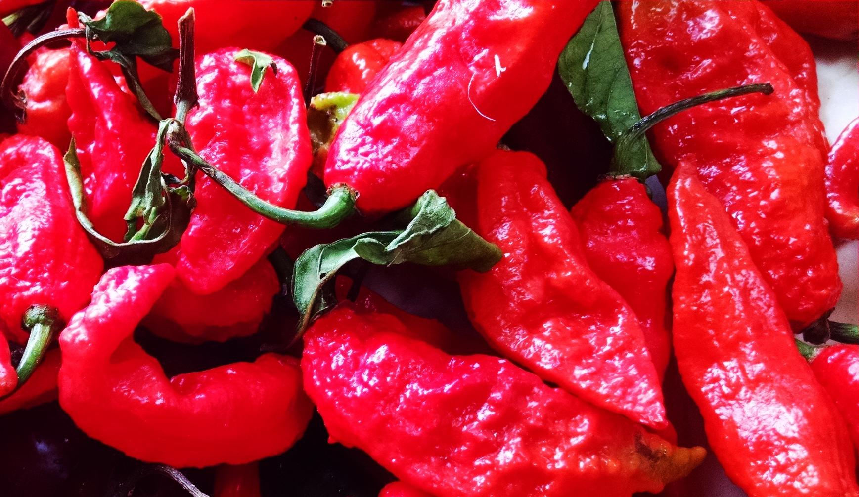 Bhut Jolokia/Ghost Pepper/Red Naga/Naga Jolokia/U-Morok/ ভোট-জলকীয়া (Assamese)