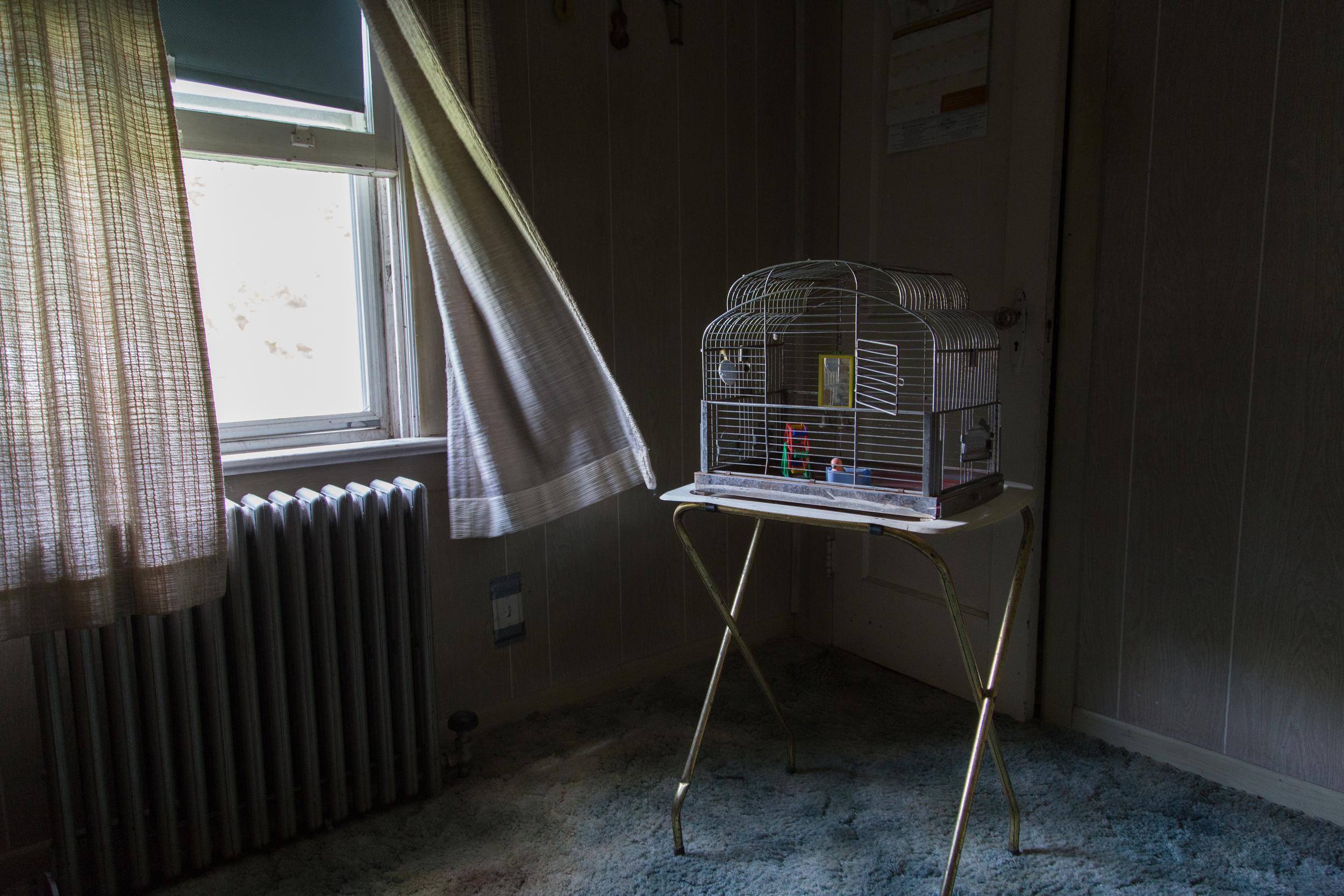 Empty Cage, 2015