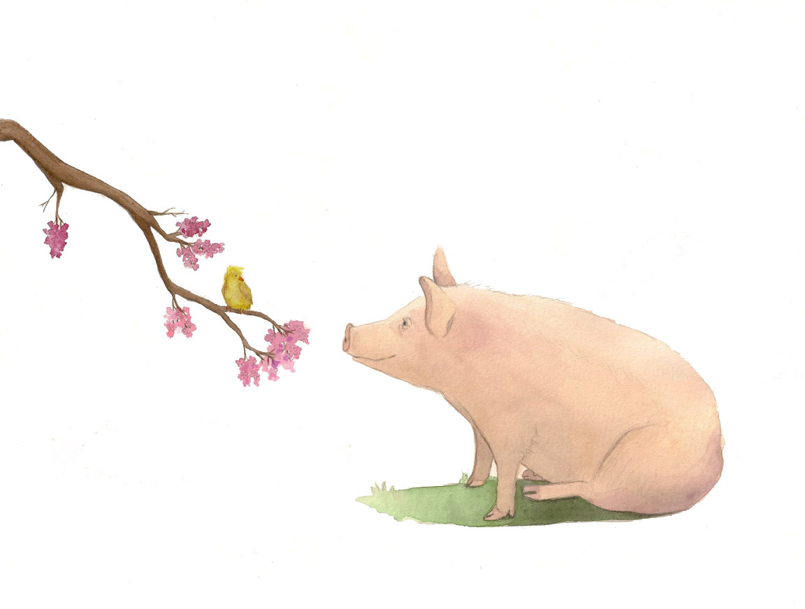 pig-and-bird-edited-for-web.jpg