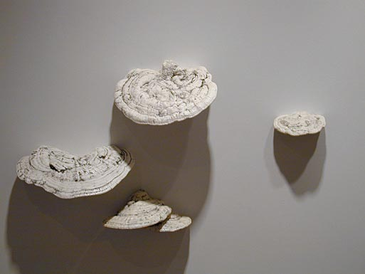 Field Guide to Allegorical and Metaphorical Plants: White Wall Fungus