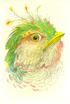 Chicago Portraits: Head of a Denizen (chicken)