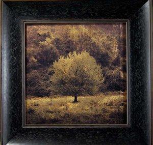 Perfect Tree II