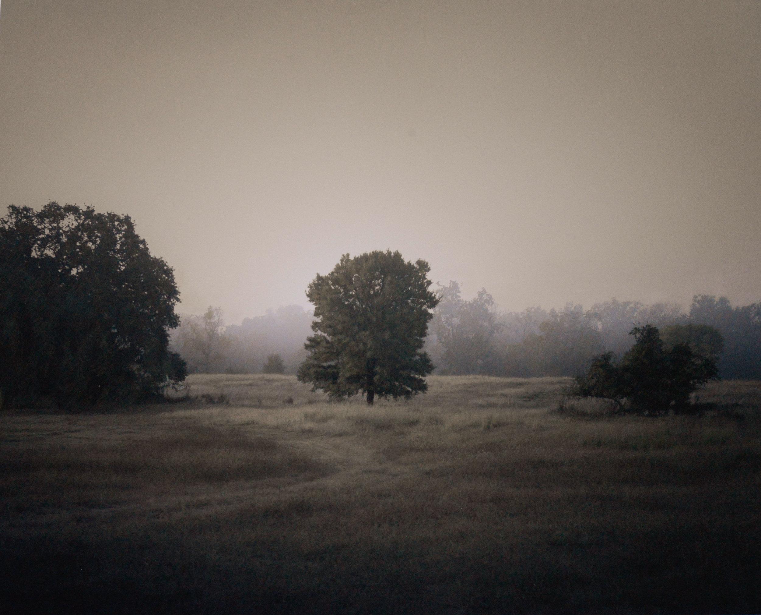 Trees in mist Plum Creek Texas