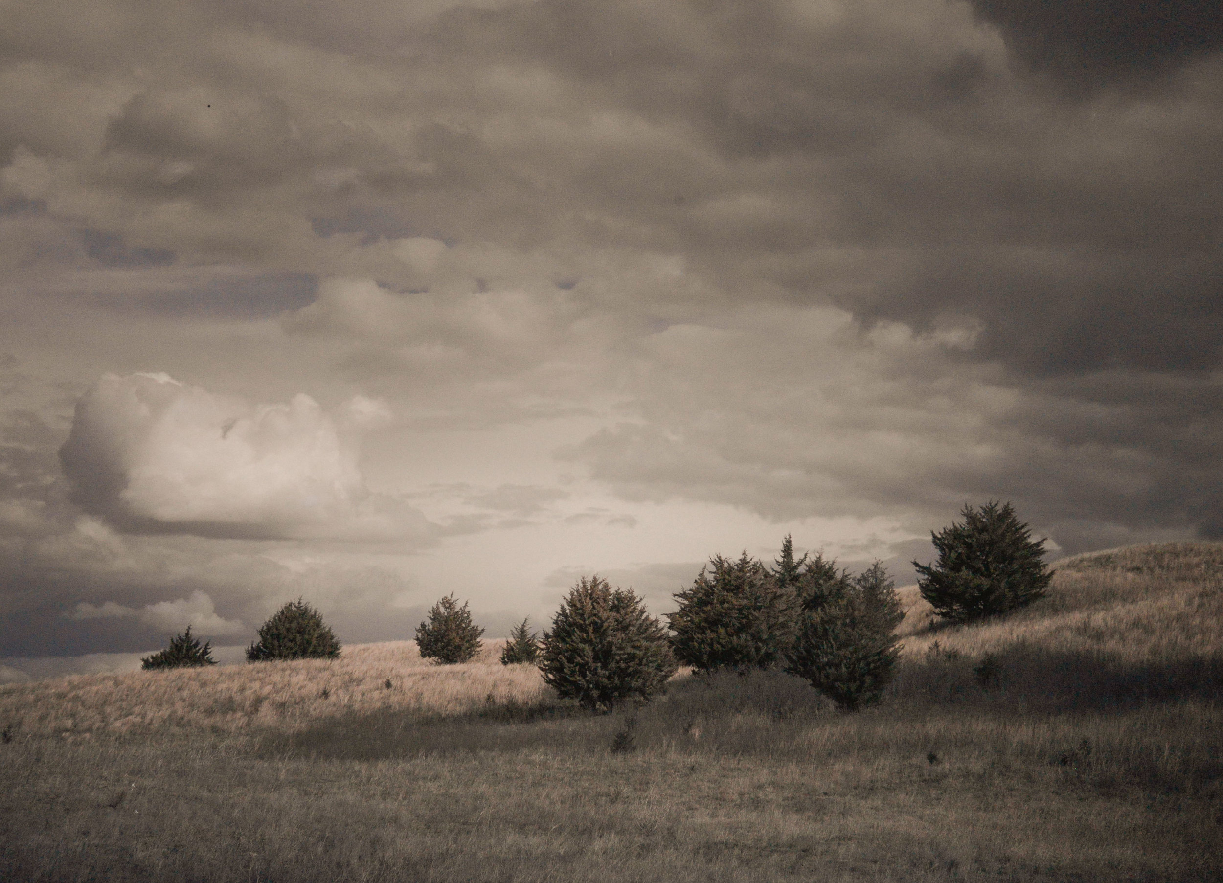 Trees, Sandhills, Nebraska
