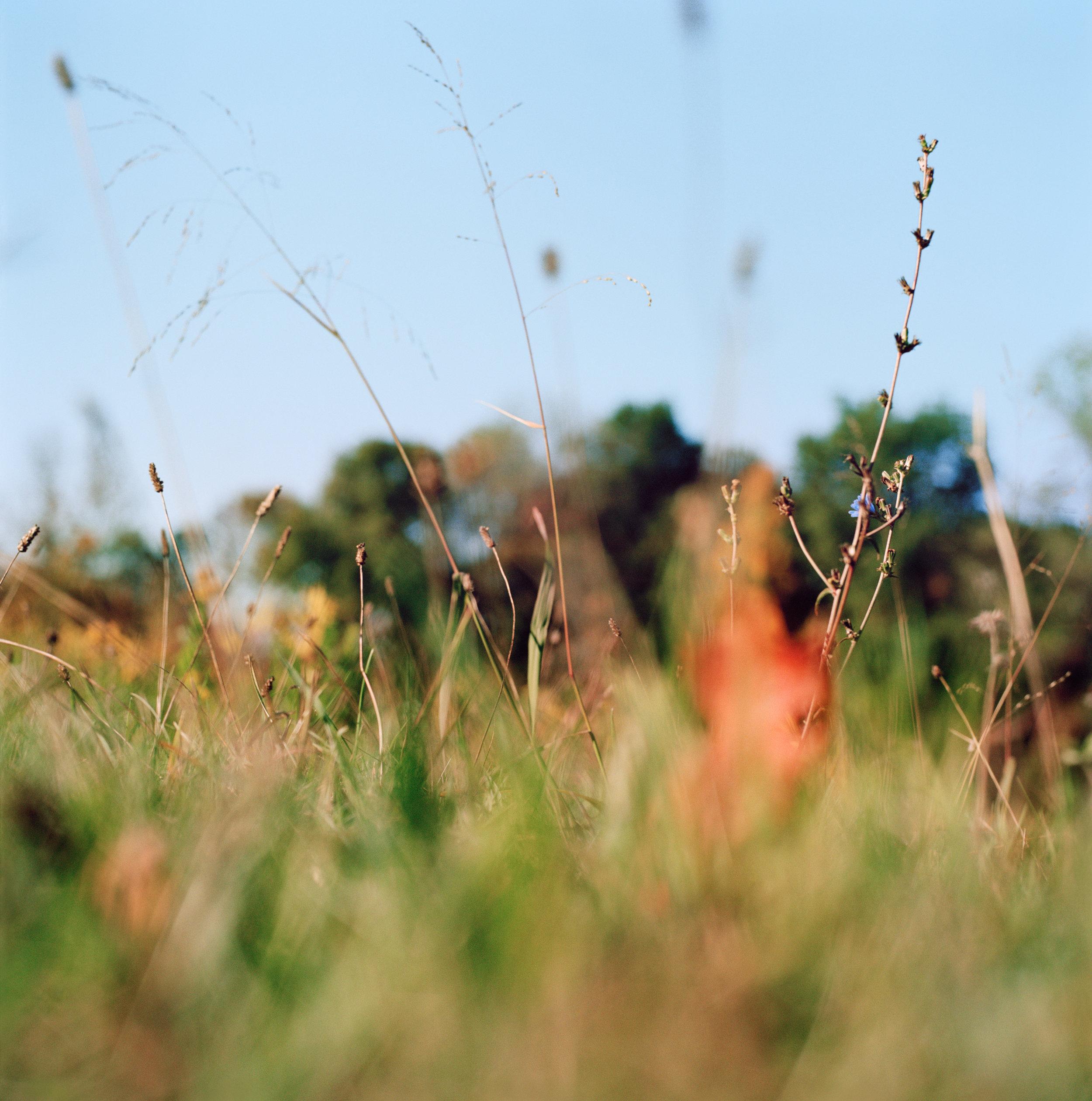 N41º07.215' W073º29.586' 10/15/15 269 ft. (Waveny Meadow)