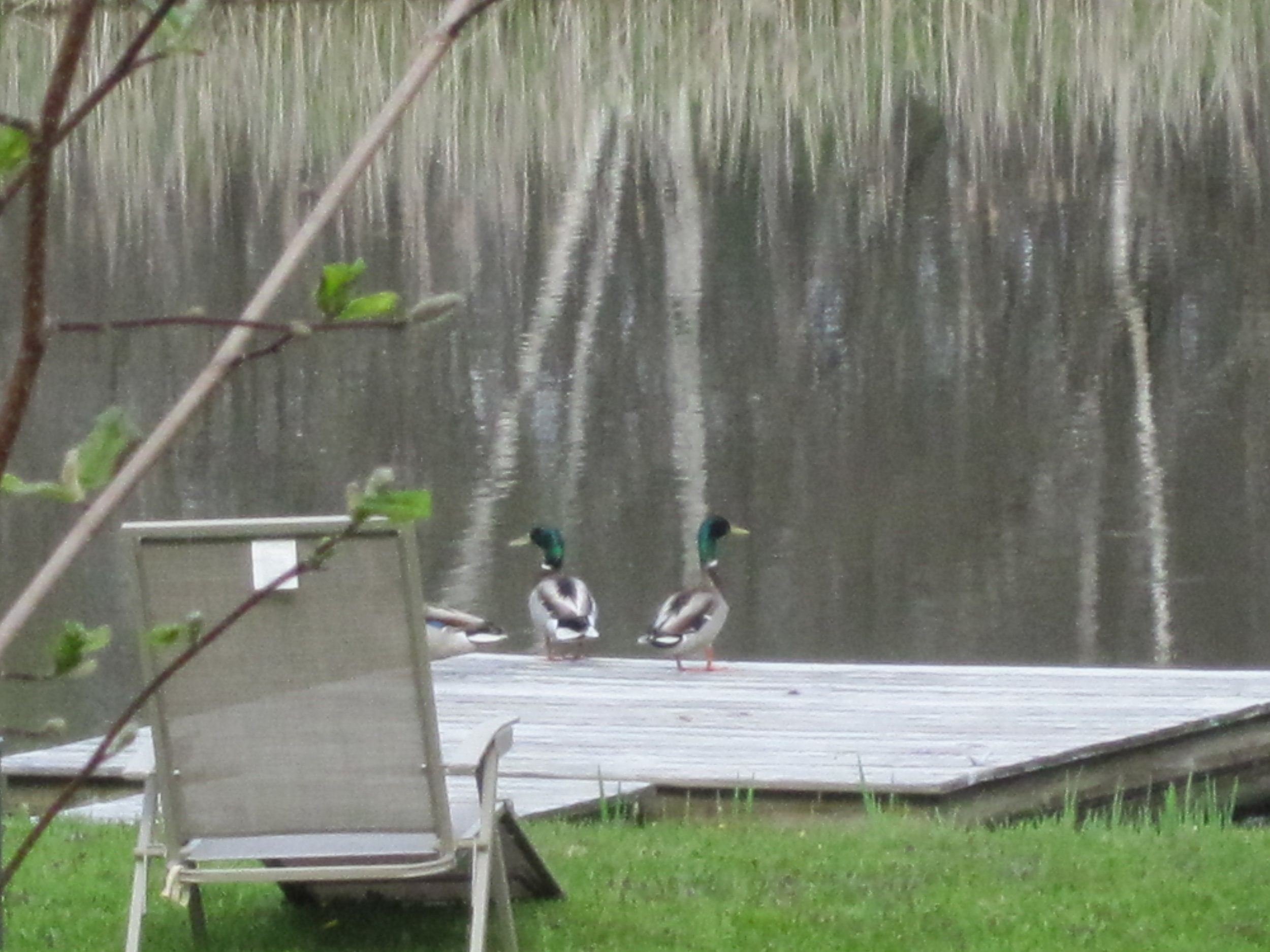 Prospective guests consider the pond