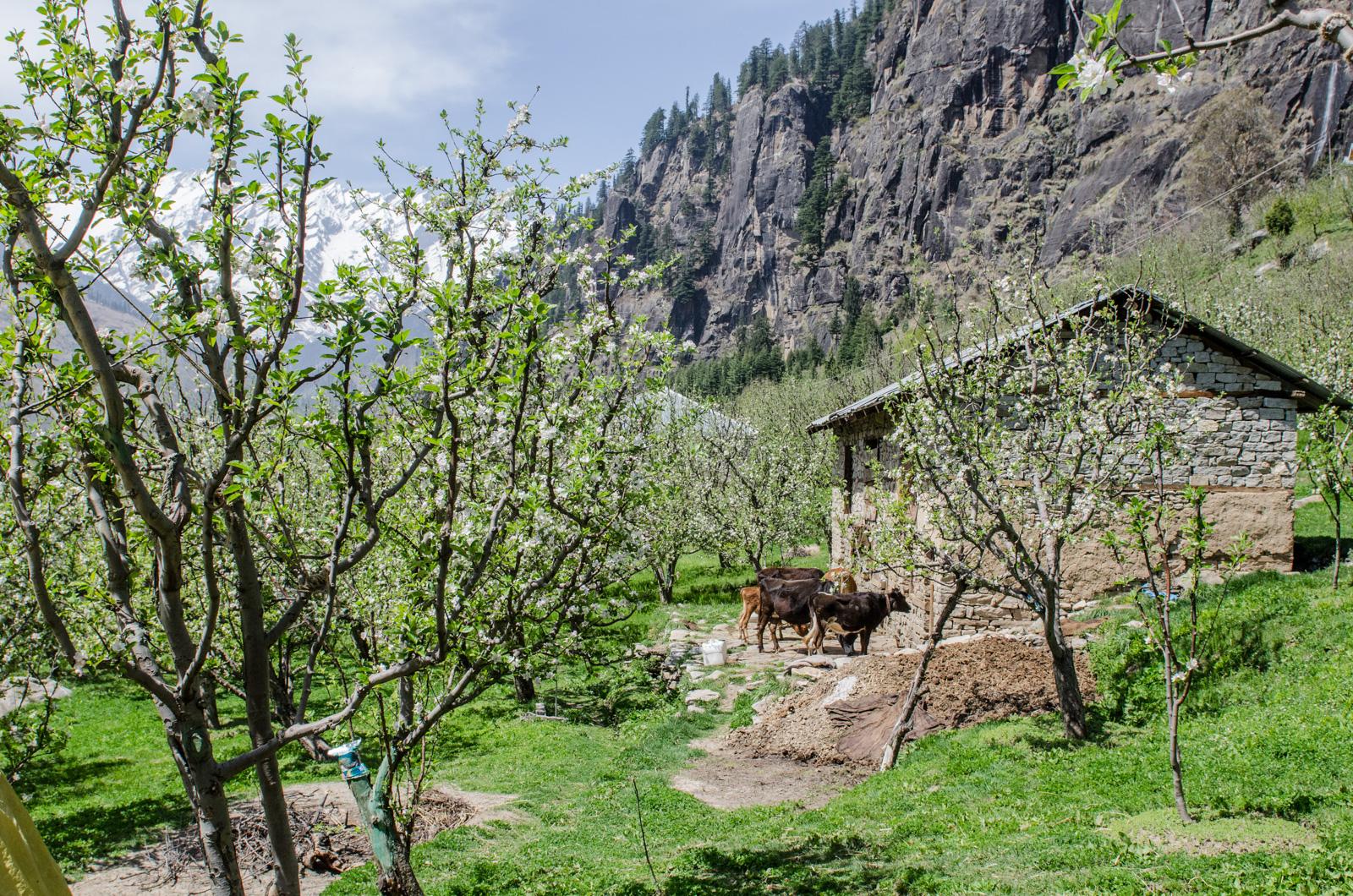 Manali-HimachalPradesh-Bouldering-RockClimbing-AmyRolloPhoto-3087.jpg