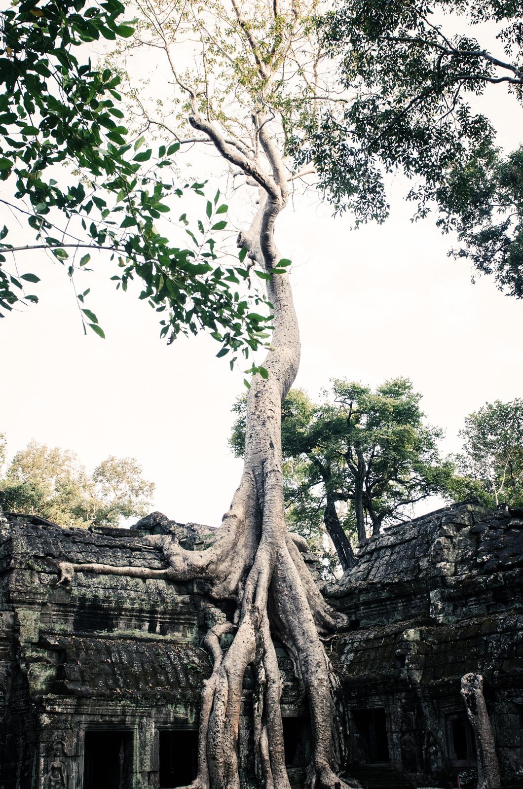 AngkorTemples-SiemReap-Cambodia-AmyRolloPhoto-2-242-Edit.jpg