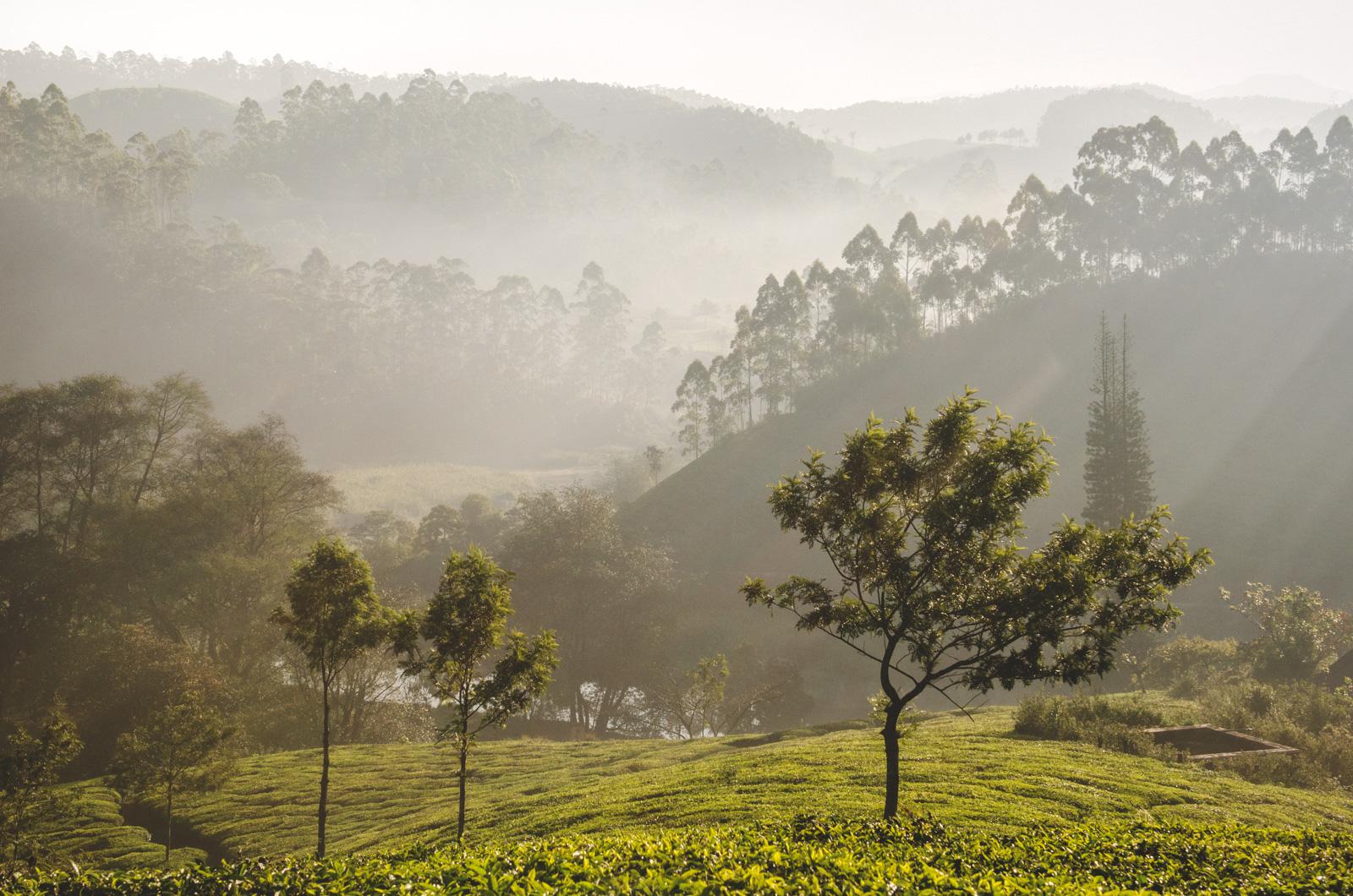 Munnar-Kerala-India-Edit-Edit.jpg
