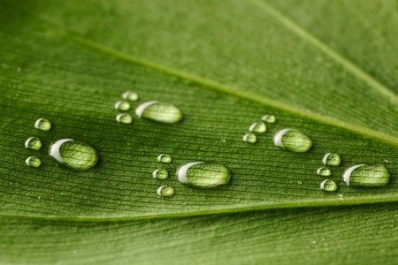 7271006_S_Spring_Leaf_Feet_Footprints_Drop_Rain_Nature_s.jpg