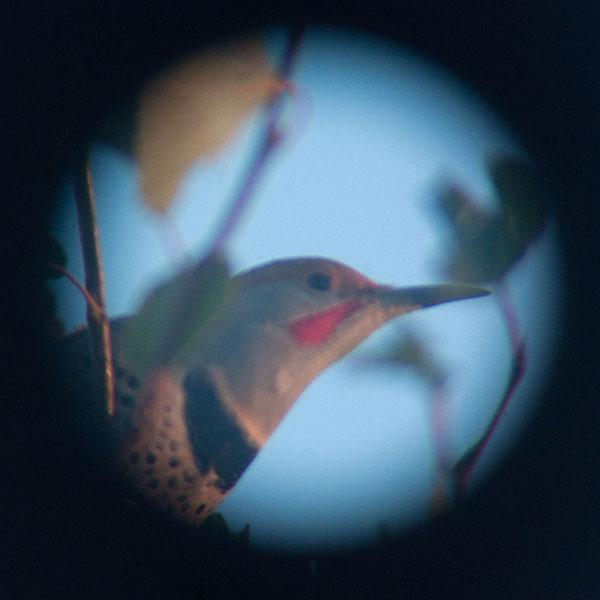 homepage_flicker-birds.jpg