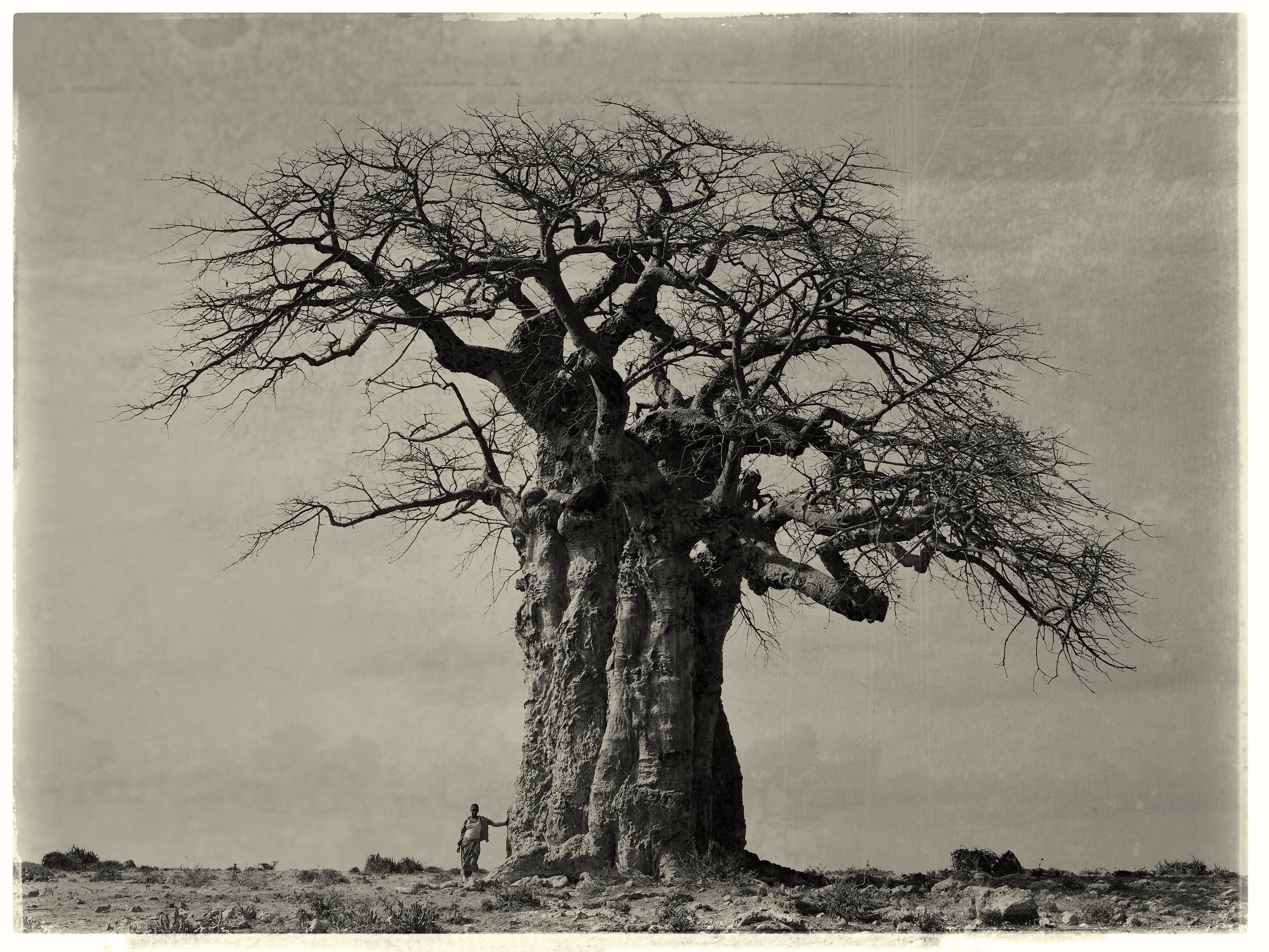 BaobabTree_BW_Test.jpg