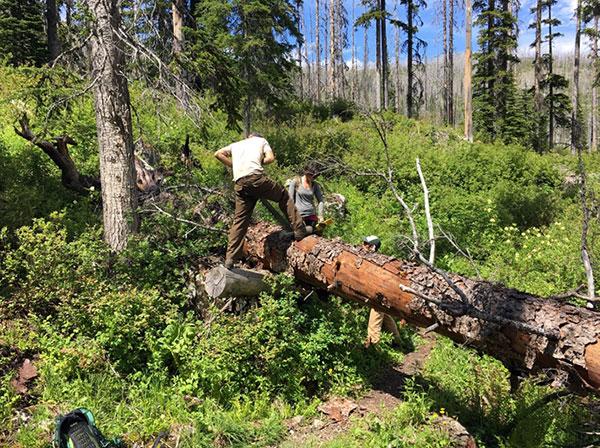 wilderness-trails-clearing-4.jpg