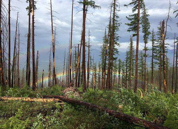 wilderness-trails-clearing-6.jpg
