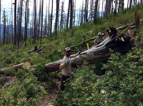 wilderness-trails-clearing-2.jpg
