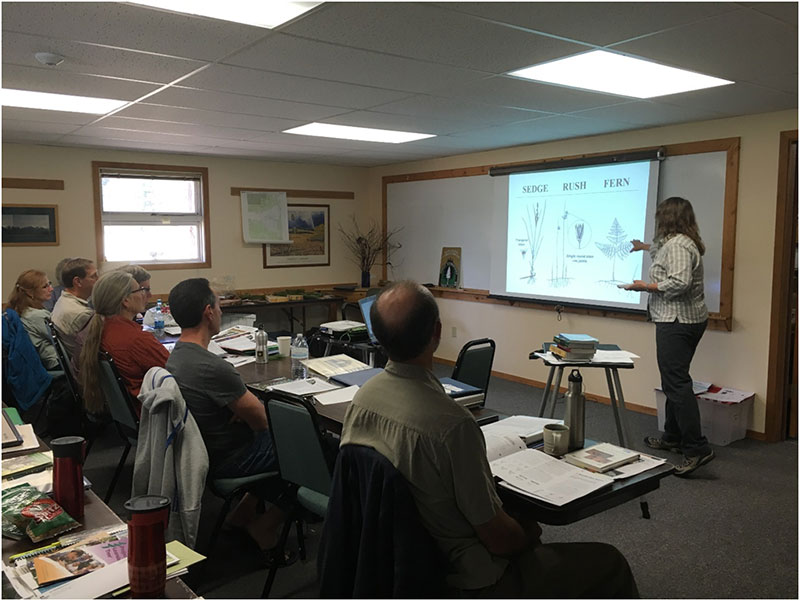 MSU Extension Forestry's Cindy Peterson teaching plant identification skills.