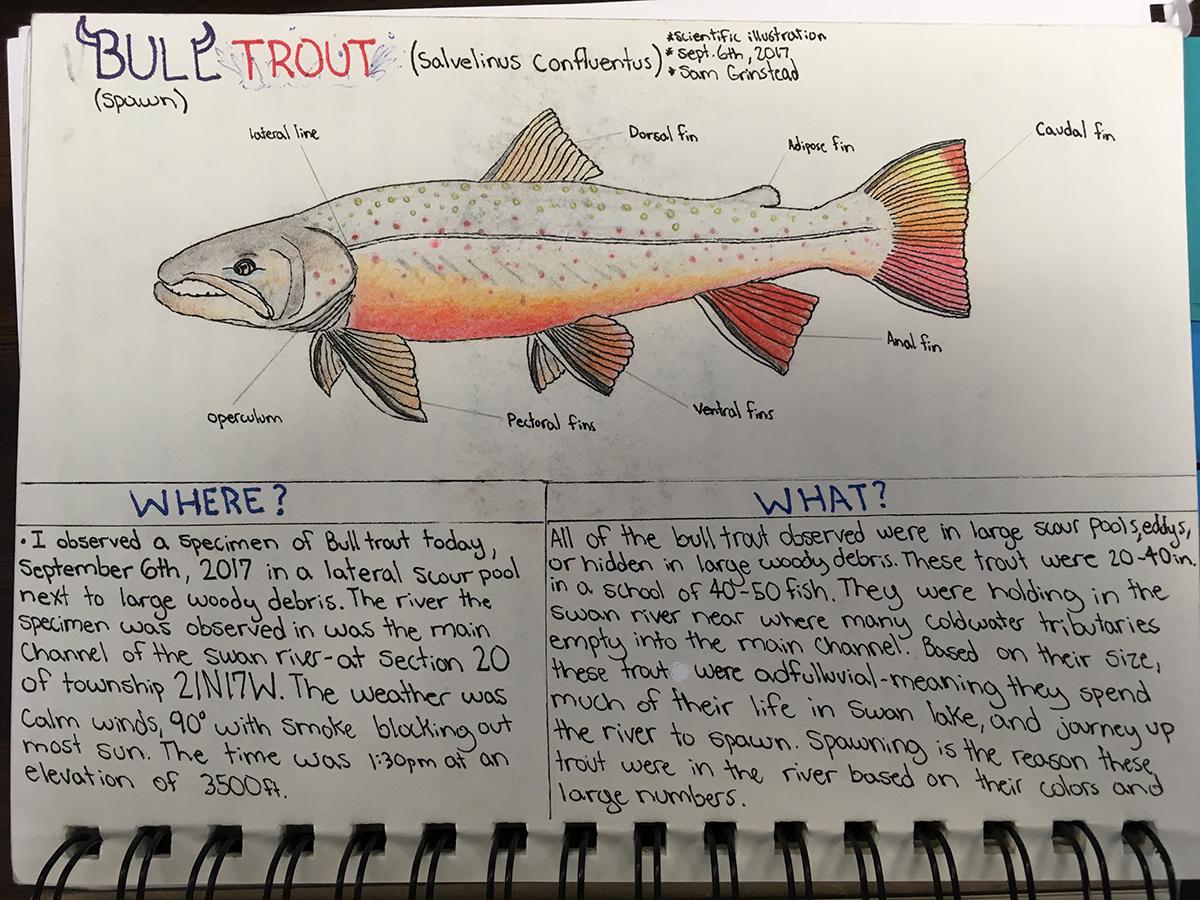 Field journal illustration - Sam Grinstead