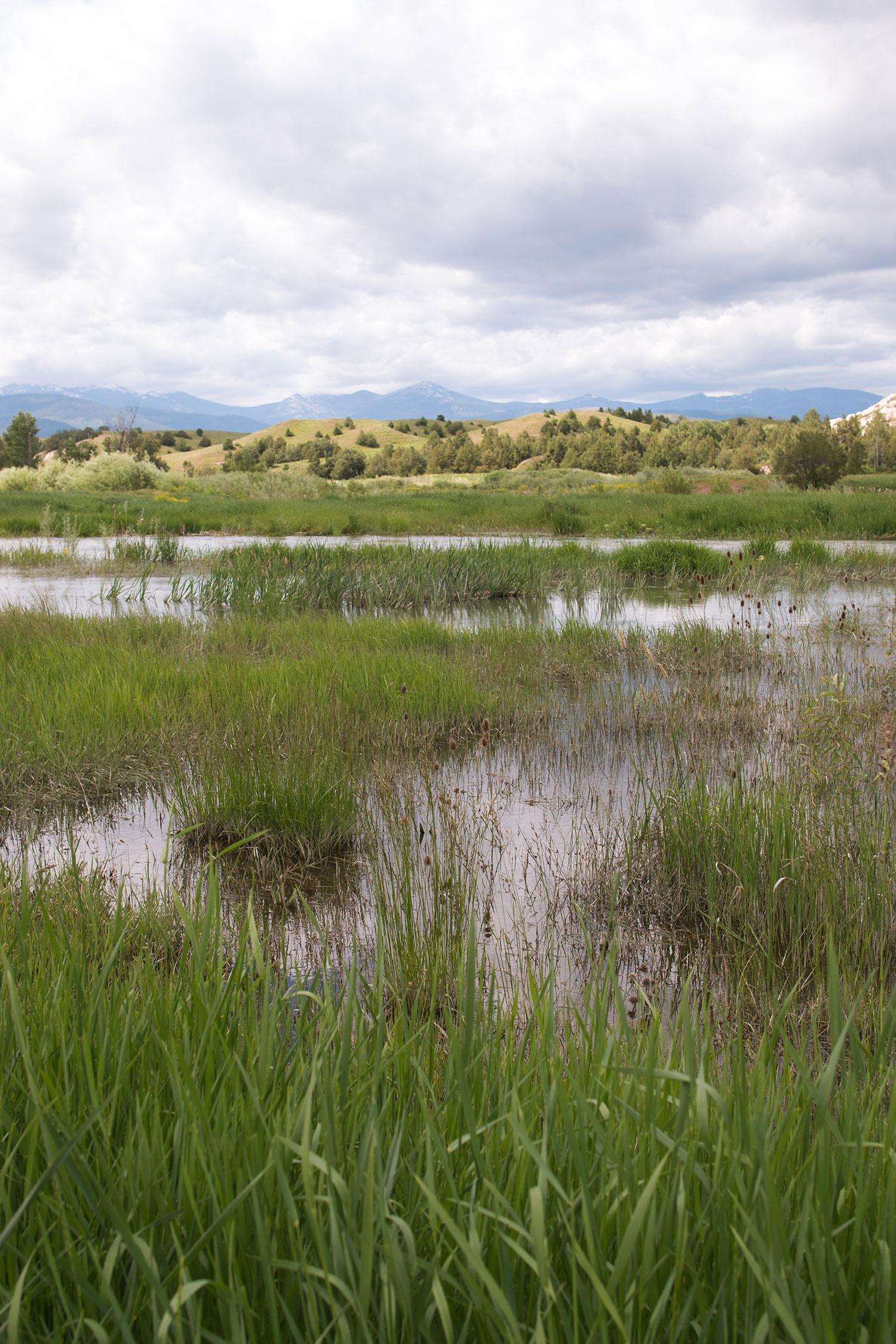 Wetlands---Mission-Valley_WiW-2018.jpg