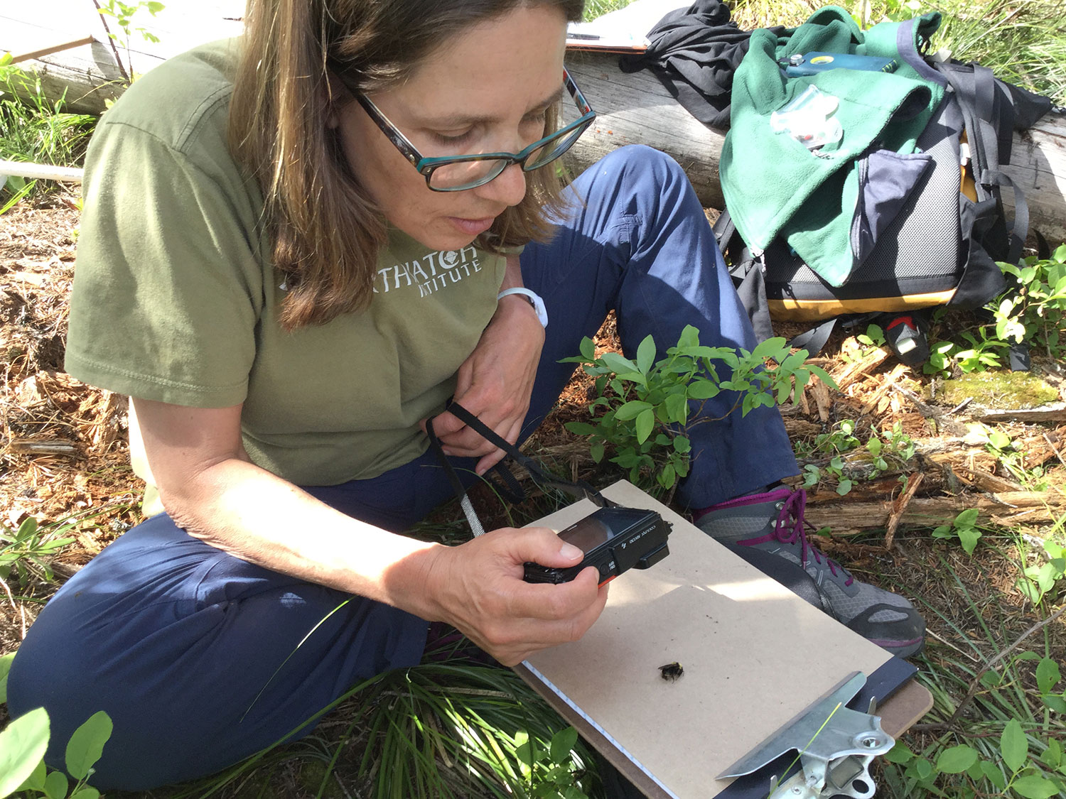 Catching, photographing, and identifying bumblebees helps us track which species use huckleberries when, and how important they are in pollination. Here, volunteer Hannah Webber (from Winter Harbor, Maine) snaps a quick photo before the bee flies away. Photo: Maria Mantas