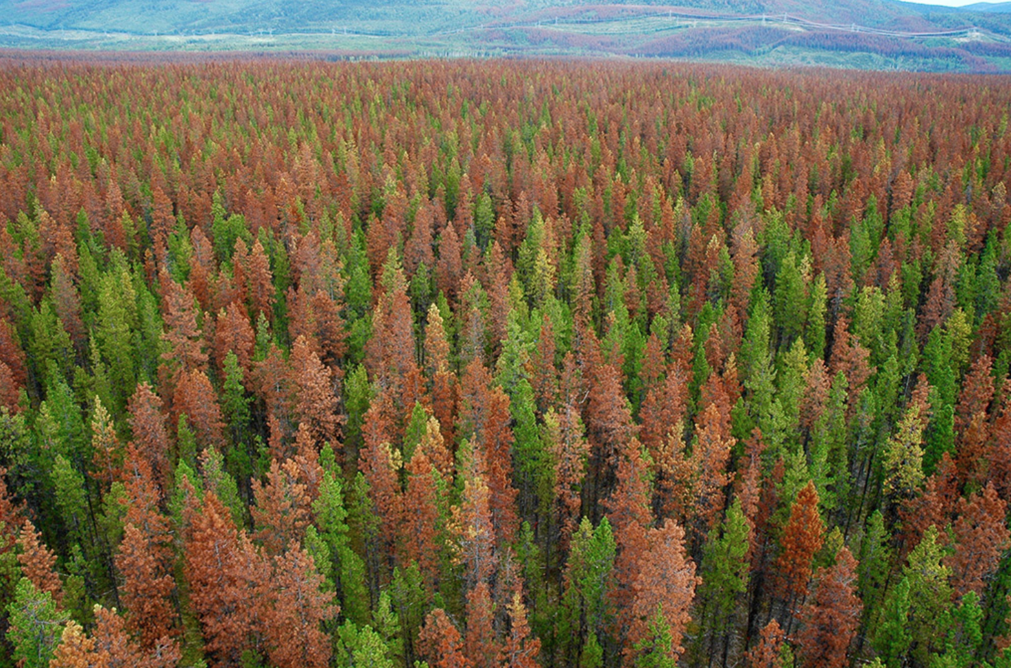 Image Credit: American Forests