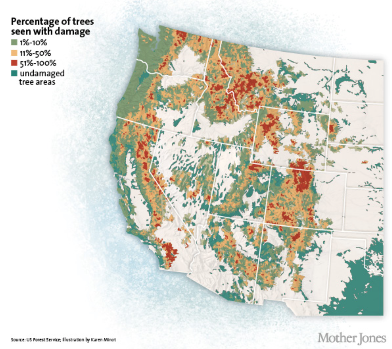 Bark beetles have impacted wide swaths of the Intermountain West. Douglas-fir and mountain pine beetles typically colonize and kill large diameter, mature Douglas-fir, ponderosa pine, and lodgepole pine, trees landowners are often most keen to protect. They can also affect whitebark pine, a threatened species of our mountains.