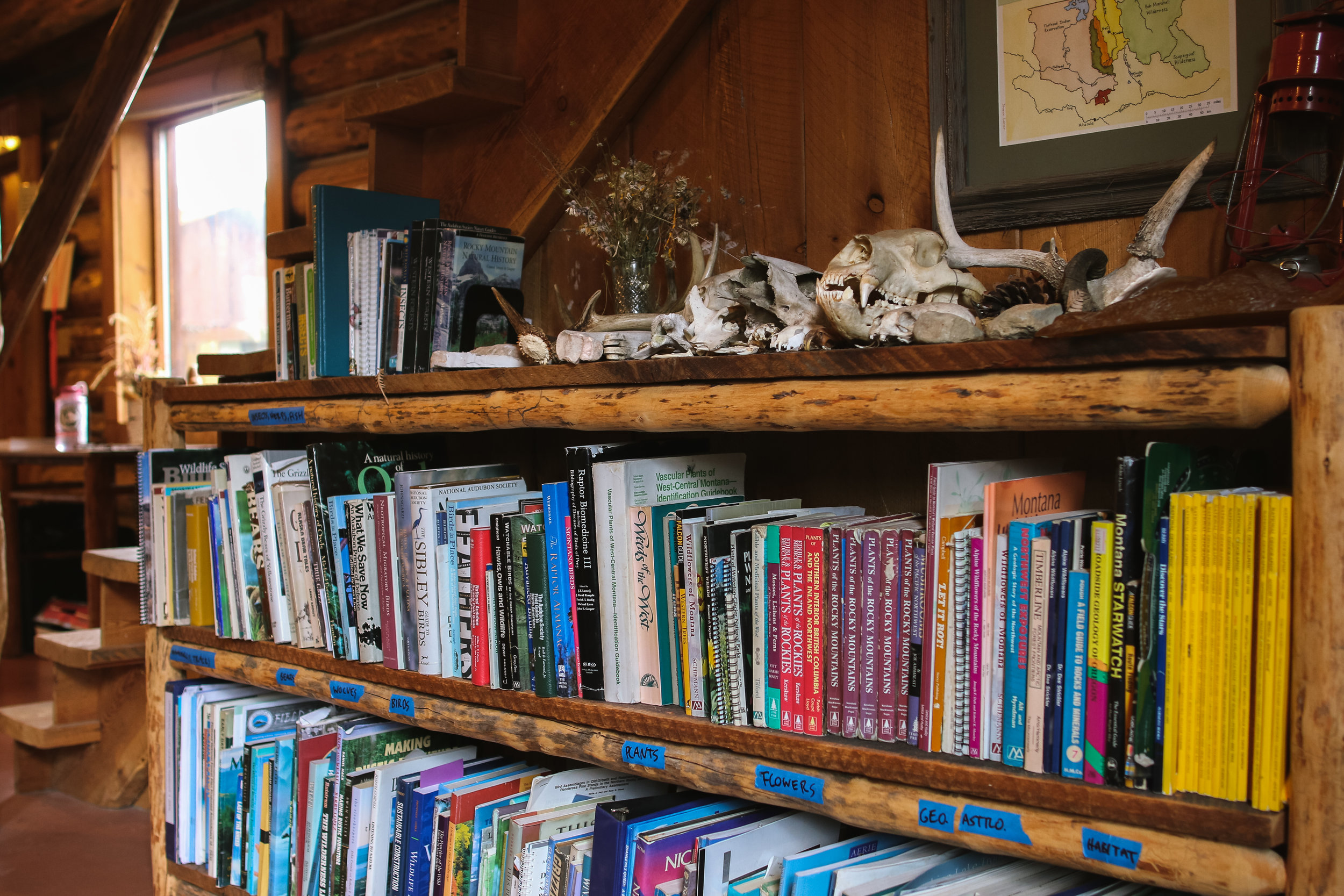 The library of relevant field guides, textbooks, and skulls.