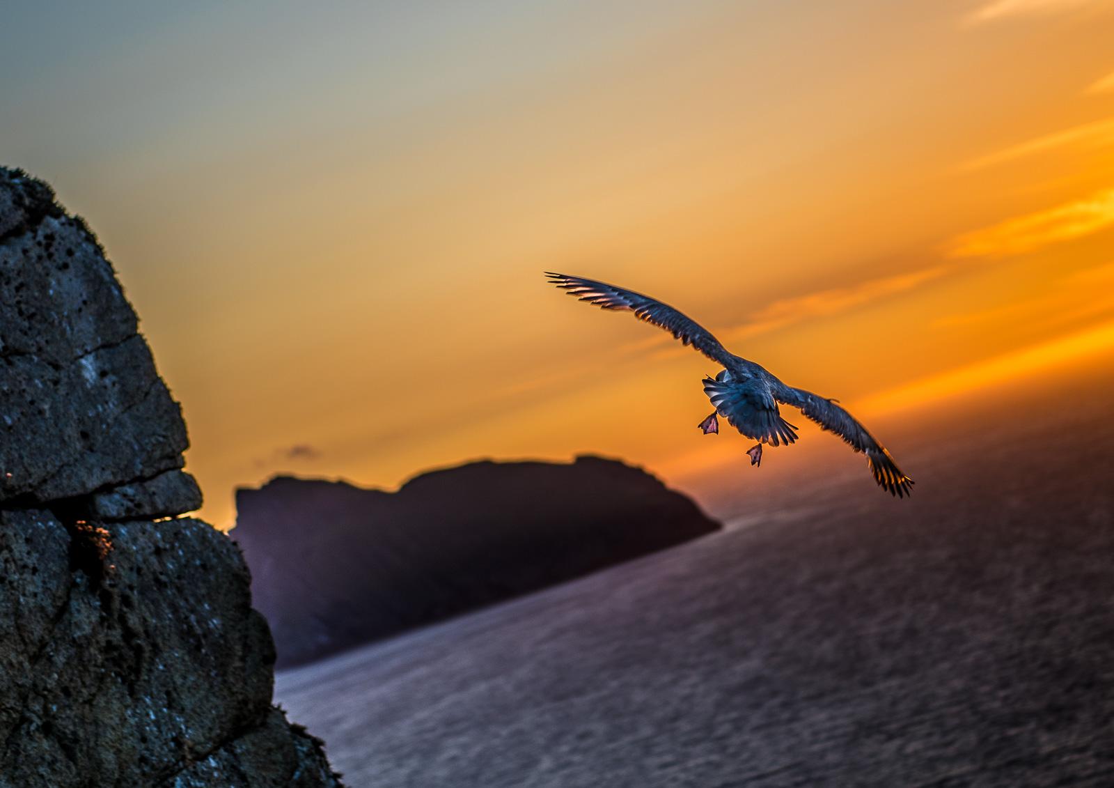 Fulmar hovering over Conachair cliffs.  Nikon D810 24-70mm f2.8 at 70mm. 1/800sec f2.8 ISO 64