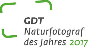 gdt logo.png