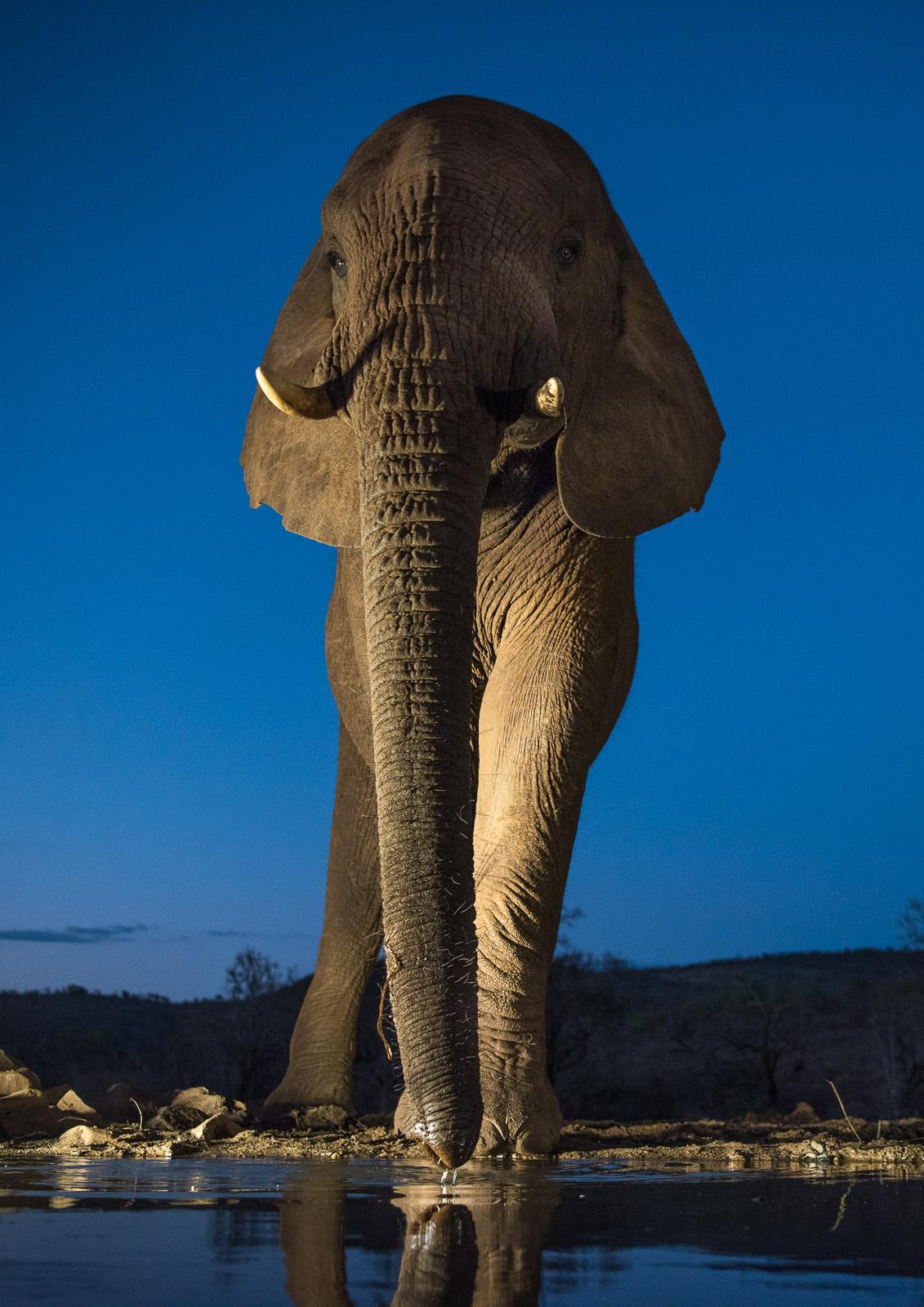 UMGODI: Elephant  Nikon D810 24-70mm f2.8 at 30mm. 1/100, f3.2, ISO800