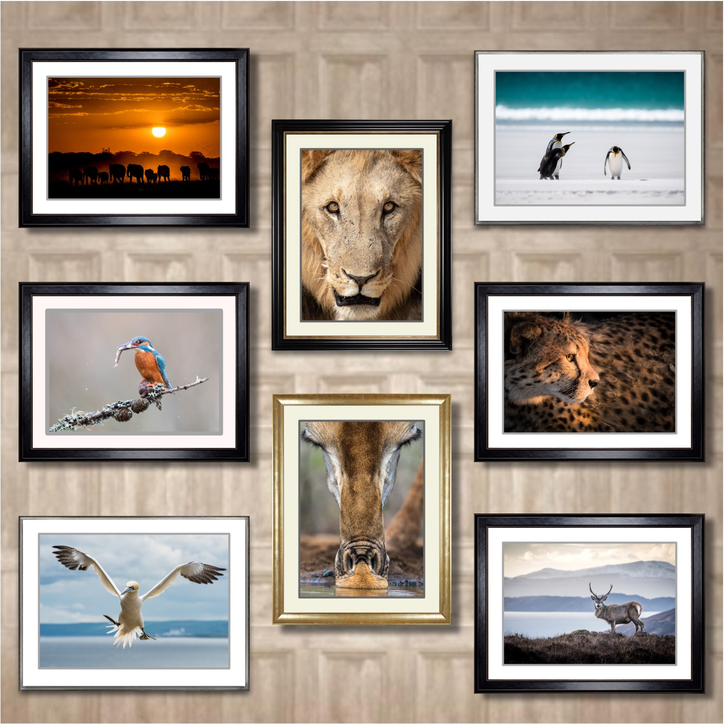 Galleries - Prints For Sale