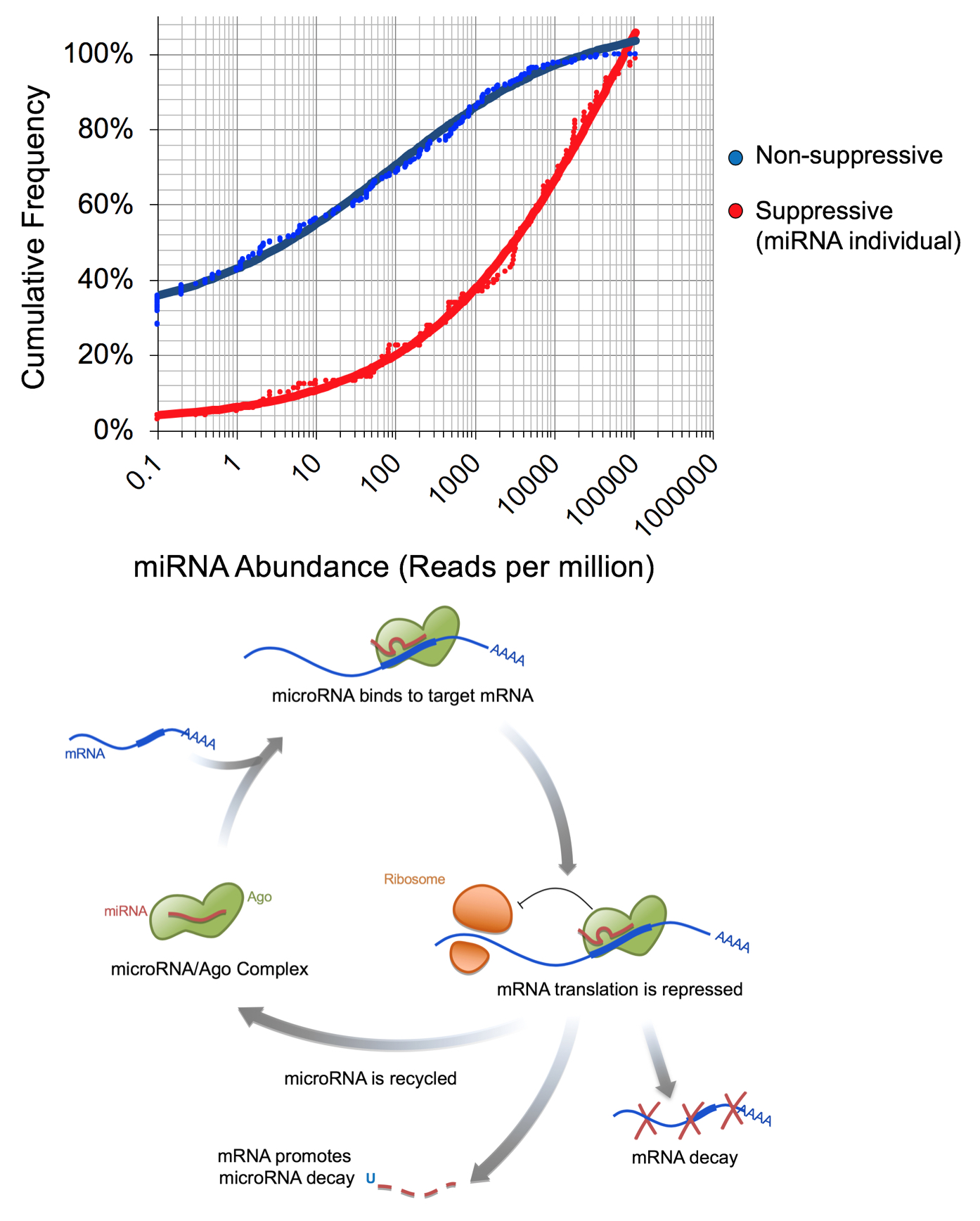 miRNA-decay-threshold.jpg